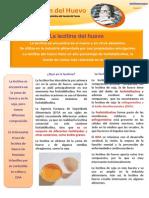 Boletin 28 Noviembre 2013 La Lecitina Del Huevo