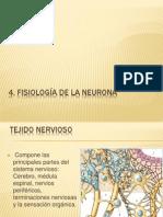 4. Fisiología de La Neurona