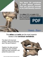Skeleton AtlasAxis 102513