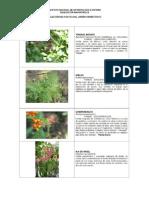 Coleccion Plantas Jardin