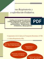 Conferencia No. 5.Cadena Respiratoria, F.oxid. Ciclo Krebs.(1)