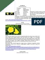 183886910 Botani Phanerogamae Doc