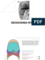 DEZVOLTAREA CEFALICA (1)
