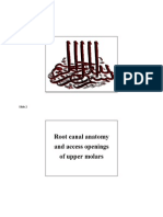 Root Canal Anatomy and Access Openings of Upper Molars