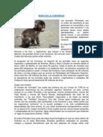 Mono en La Comunidad
