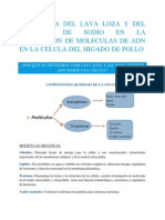 Influencia Del Lava Loza y Del Cloruro de Sodio en La Extraccion de Moleculas de Adn en La Celula Del Higado de Pollo