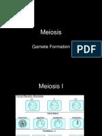 meiosis-nr