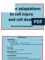 Cellular Adaptations to Disease Dmf2