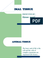 Animal Tisue