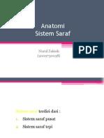 Anatomi SSP Nui