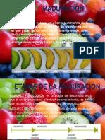 Frutas Final
