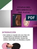 etapas-del-desarrollo-pre-natal.ppt