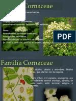 Familia Cornaceae