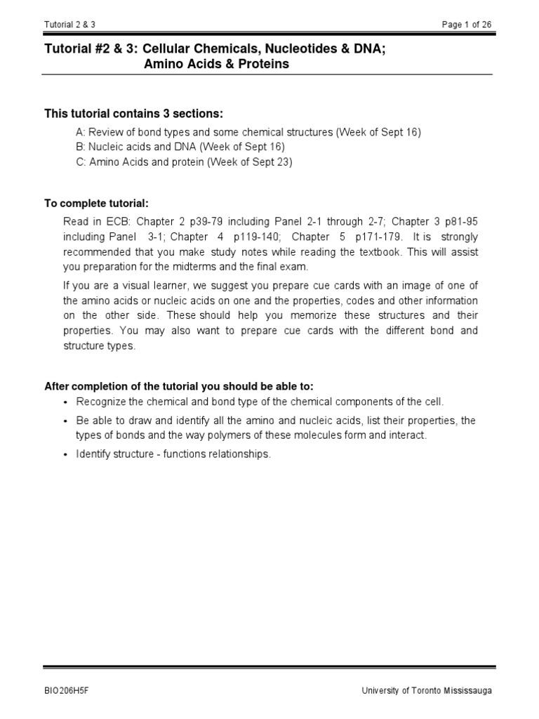 Bio 206 Tutorial02 03 Base Pair – Nucleic Acid Worksheet