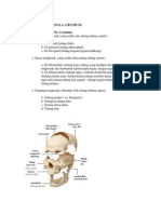 Anatomi Dasar Kepala