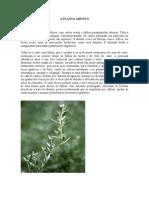 A Planta Absinto
