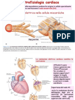 elettrofisiologia_cardiaca