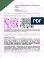 Celulas Eucariontas.pdf