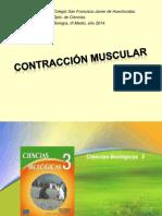 Músculos (2)