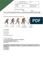 Prueba Prehistoria 7