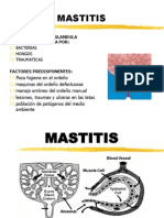MASSTITIS