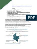 Informe Confecciones Ricardo