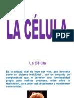1a celula