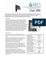 Oak Wilt by Ceratocystis Fagacearum