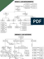 Mapas Conceptuales d Biología