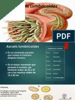 Presentacion Ascaris y Trichuris