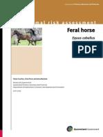 Feral Horses in Australia