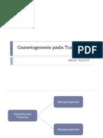Gametogenesis Pada Tumbuhan