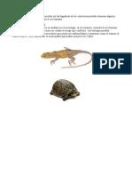 trabajo_de_ciencias_reptiles.pdf