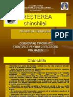 1 - CHINCHILA
