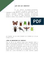 Qué Son Los Insectos