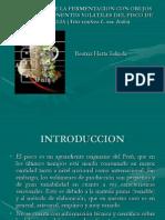 Pisco-tesis Hatta 2004