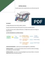 Arteria Lingual y Facial