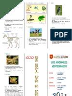 animalesvertebradostriptico-111112085528-phpapp02