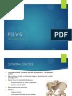 Clase 1_pelvis Osea