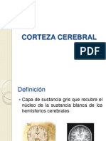 Corteza Cerebral Neuro