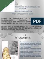 3. Cadena de Transporte de Electrones Y Fosforilación Oxidativa