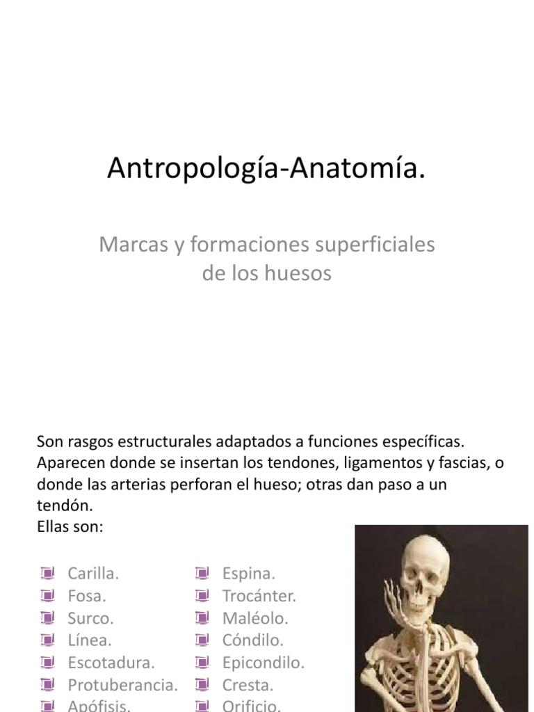 Antropología-Anatomía