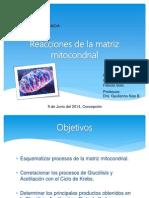 Presentación Matriz Mitocondrial
