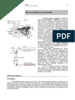 07.sentido_audicao_equilibrio.pdf