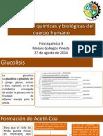 Reacciones Químicas y Biológicas Del Cuerpo Humano