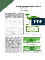 Fotosintesis C3 C4 y CAM Gemido