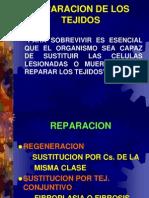Regeneración y Cicatrización COMPLETA