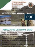 Aspecto de Un Animal Sano