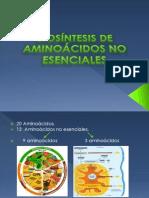 Biosintesis de Aminoacidos No Esenciales