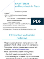 ch20_biosintesis